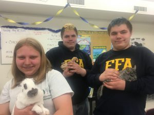 Three students hold rabbits, chinchillas and a duck