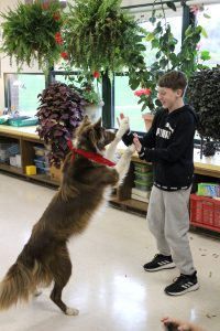 dog stands on its hind legs to high five a sixth grade student